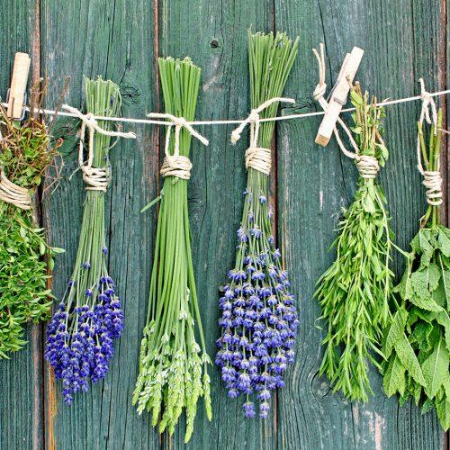 herbs-aromatic_92961100